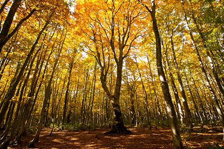 樹齢約280年のマザーツリー